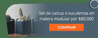 Set de cactus o suculentas en matera modular por $80.000 - Marga Plantas