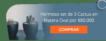 Hermoso set de 3 Cactus en Matera Oval por $80.000 - Marga Plantas