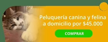 Peluquería canina y felina a domicilio por $45.000 - Pets Grooming 18