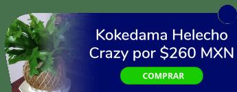 ¡Dale vida a tu hogar! Kokedama Helecho Crazy por sólo $260 MXN - Dekoke Paisajismo