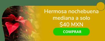 Hermosa nochebuena mediana a sólo $40 MXN - Viveros Portales