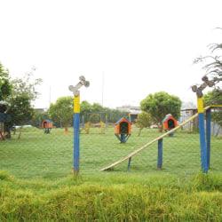 Perritos Divertidos en Bogotá