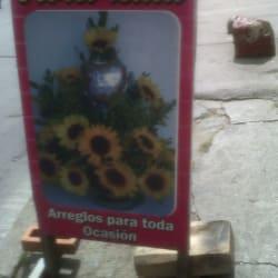 Flores Lulu en Bogotá