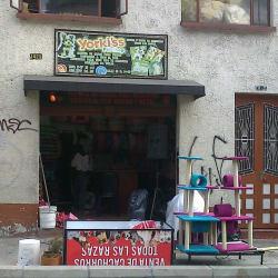Yorki'ss en Bogotá
