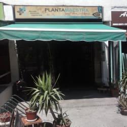 Planta Maestra - Providencia en Santiago