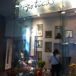 Exóticas Flores - Las Condes en Santiago