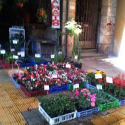 Vivero San Pablo en Santiago