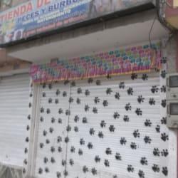 Peces y Burbujas en Bogotá