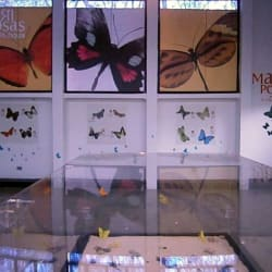 Museo de historia natural en Bogotá