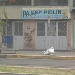 Pajarera Piolin en Bogotá