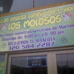 Los Molosos en Bogotá