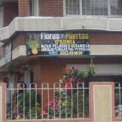 Flores y Plantas D'Sonia en Bogotá