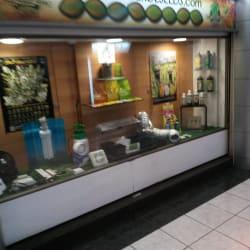 Casa Verde Seeds en Santiago