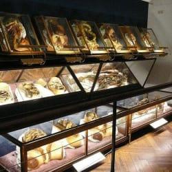 Museo de Anatomía  en Santiago