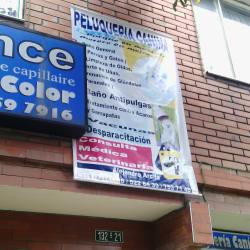 Peluqueria Canina Alejandro arcila en Bogotá