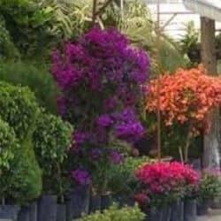 Arreglos Florales Flor Viva Ltda. en Santiago