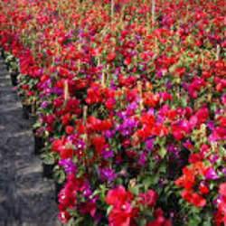 Flower Home Ltda. en Santiago