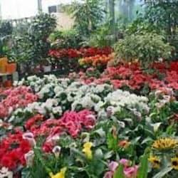 Jardín Buin en Santiago