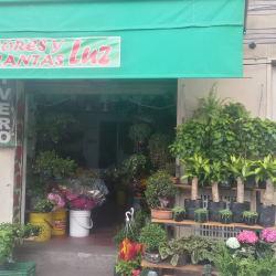 Flores y Plantas Luz en Bogotá