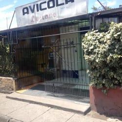 Avicola Luciano en Santiago