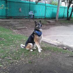 Family Kan Dog en Bogotá