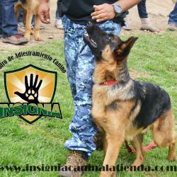 Centro de Adiestramiento Canino Insignia en Bogotá
