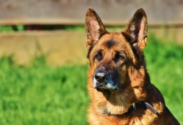 11 días de hotel para tu perro por solo $200.000
