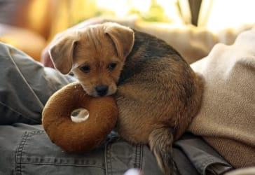 Ofertas de Tienda para mascotas