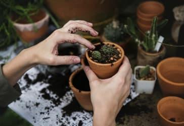 Insecticidas para plantas de jardinería por $15.000