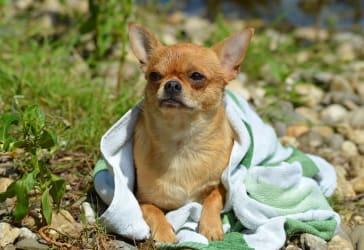 Toalla absorbente de baño para mascota por $29.000