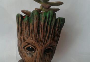 Matera Groot con suculenta por solo $25.000