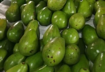 12 kilos de Aguacates Papelillo por $60.000