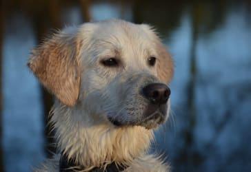 Esterilización canina para hembras de hasta 20kilos por $120.000