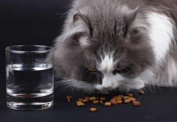 Paquete Cat Chow para adultos por $26.000