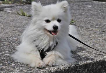 Dog Chow edad madura por $20.800