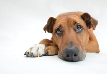 Servicio funerario premium para mascotas por $500.000
