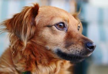 Servicio funerario estándar para mascotas por $130.000
