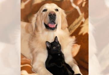Servicio funerario estándar para mascotas por $250.000