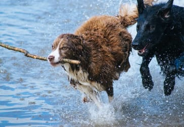 2x1 en entrenamiento canino por $300.000