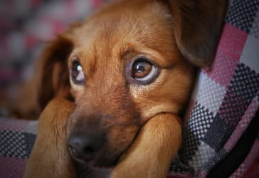 Cargador para tú mascota por solo $139.900