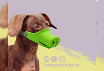 Bozales para perros con diseño por $30.000