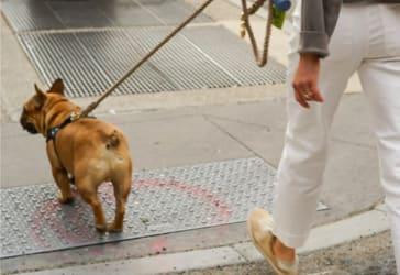 Caminata canina diaria 2 meses por el precio de 1 por solo $330.000