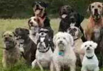 Ofertas de Perros