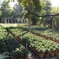 Vivero Jardin Pehuen en Santiago