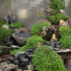 Viveros Real Bonsai en Santiago