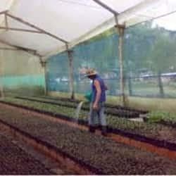 Carrizalillo Growers S.A. en Santiago