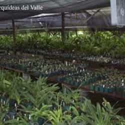 Diseño y Decoración de Ambientes Gerbera Ltda.  en Santiago
