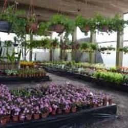 Venta de Flores Lafloreria en Santiago