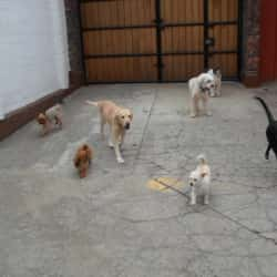 Happy Pets Hotel Canino Bogotá en Bogotá
