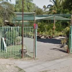 Garden Plus Vivero en Santiago